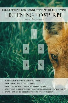 Tarot Spreads Beginners Discover Tarot Spread - Listening to Spirit: Connecting with the Divine Emerald Lotus Divination If this tarot spread calls to you I must reinforce: its always the right time to deepen your connection to Spirit! Tarot Cards For Beginners, Tarot Card Spreads, Images Esthétiques, Free Images, Tarot Astrology, Free Tarot, Oracle Tarot, Tarot Card Meanings, Card Reading