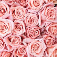 Ideas for flowers peonies background pink roses Pretty Flowers, Pink Flowers, Pretty In Pink, Flowers Today, Purple Roses, Pink Blue, Rose Wallpaper, Pink Aesthetic, Floral Bouquets