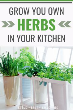 Learning how to grow your own herbs brightens up your food and you can use them for medicine or tea also. How to grow your own herbs. Healing Herbs, Medicinal Herbs, Natural Healing, Herbs For Health, Health Tips, Health Articles, Garden Animals, Natural Kitchen, Healthy Lifestyle Tips