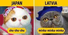 How tocall toacat indifferent languages
