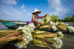 A Woman Collects Water Lilies, Chau Doc, Mekong Delta, Vietnam.  Photo is finalist in Smithsonian Photography Competition