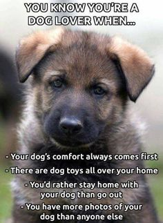 Wicked Training Your German Shepherd Dog Ideas. Mind Blowing Training Your German Shepherd Dog Ideas. I Love Dogs, Puppy Love, Cute Puppies, Dogs And Puppies, Adorable Dogs, Cat Anime, Jiff Pom, Diy Pet, Game Mode