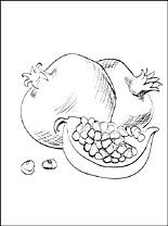 Pomegranate Coloring Page Coloring Pages Coloring Pages