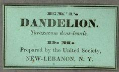 Ext. Dandelion. Taraxacum dens-leonis :: Shaker Ephemera