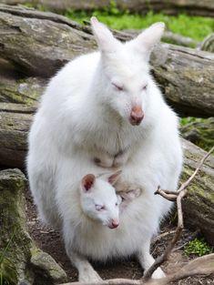 25 mooie foto's van prachtige, schattige en soms zeldzame albinodieren   Flabber