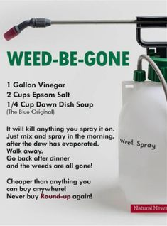 Saw this online and Im wondering if anyone has tried it? Im a true newbie in the yard and Im looking for natural weed killer recipes that work. Really want to avoid RoundUp! Garden Yard Ideas, Lawn And Garden, Garden Projects, Garden Ideas For Small Yards, Blue Garden, Container Gardening, Gardening Tips, Organic Gardening, Vegetable Gardening