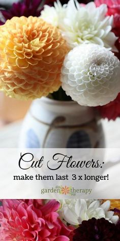 How to make your cut flowers last three times longer and stay beautiful