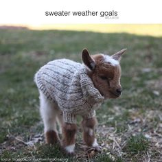 Sweater weather goals