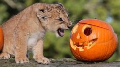 halloween africa - Google Search