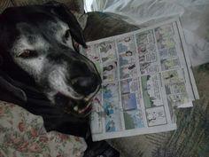 "Sasha.....  Ha Ha....  See Dogs can LAUGH.   I just did  "" Booyah ""  3 of 3"