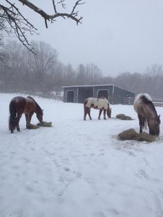 Our little mustang herd. From left: Valor, Amado and Macai.
