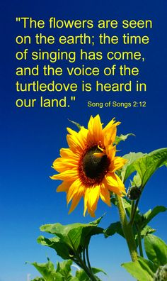 A call to adoring songs of love- praise in MMM. www.magnificatmealmovement.com