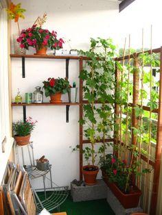 make an ivar trellis - Balcony Plants , make an ivar trellis Balcony Garden. Small Balcony Garden, Balcony Plants, Small Patio, Balcony Gardening, Balcony Herb Gardens, Balcony Ideas, Diy Trellis, Garden Trellis, Bamboo Trellis