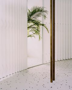 To add more curves to the space, semi-transparent curtains are installed around the perimeter. With their folded forms, these curtains give a suggestion of tactility. Exotic Plants, Tropical Plants, Sky Ceiling, More Curves, Shopping Street, White Curtains, Interior Photography, Stone Houses, Minimalist Interior