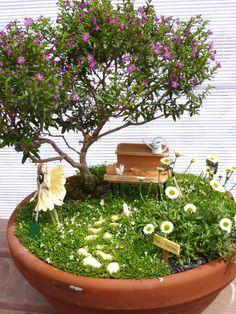 Mexican Heather or Serissa for fairy garden trees!