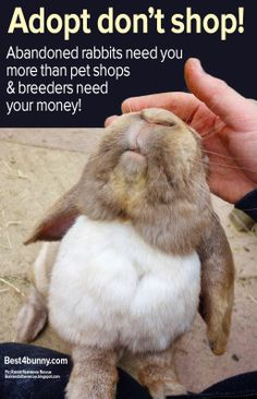 Abandoned rabbits need you more than pet shops or breeders need your money