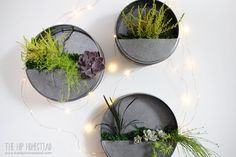 s 15 easy diy projects that you can do this weekend, Faux Galvanized Wall Planter Galvanized Wall Planter, Diy Hanging Planter, Diy Planters, Succulent Wall Planter, Indoor Succulents, Vertical Planter, Galvanized Steel, Garden Planters, Succulents Garden