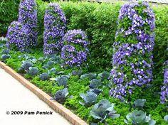 Beautiful Vegetable Gardens | This is not just vegetable gardening. It's good design!