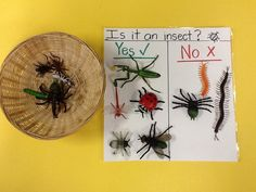 Is it an insect sorting? We count the legs and body parts to determine if it is… Montessori Science, Preschool Science, Teaching Science, Preschool Crafts, Investigation Area, Investigations, Minibeasts Eyfs, Head Start Preschool, The Very Busy Spider