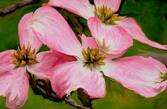Imagining how a surrealist would view pink dog wood flowers in spring. Framed prints,or pillows with the image can be purchased via Fine Art America. Thanks