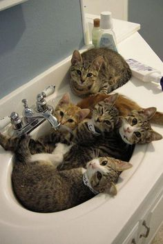 """""""We live here now"""" — these photos from pets who love the bathroom"""