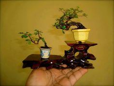 The girl in the red hood : Photo Bonsai Fruit Tree, Bonsai Art, Bonsai Plants, Fruit Trees, Moss Garden, Garden Trees, Bonsai Meaning, Minis, Japanese Tree