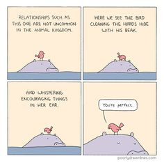 bird-and-hippo