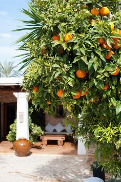 Agroturismo Atzaró is surrounded by orange and olive groves in the heart of Ibiza's north.
