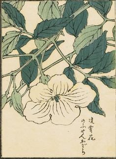 "Japanese antique woodblock print Kōno Bairei ""Chinese trumpet creeper"""