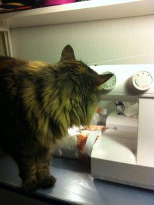 Produksjonen er igang igjen Cats, Animals, Gatos, Animales, Animaux, Animais, Kitty, Cat, Animal