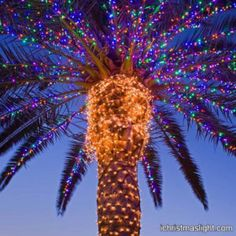Outdoor string lights wrapping palm trees | iChristmasLight Christmas Lights Outdoor Trees, Christmas Palm Tree, Christmas String Lights, String Lights Outdoor, Outdoor Christmas, Christmas Colors, Christmas Photos, Merry Christmas, Christmas Decorations