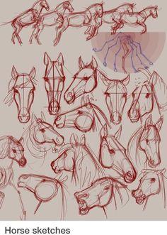 Pferdchhen zeichnen
