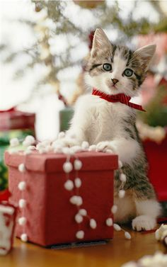 I want to get a picture like this with my cat this yr. That is if he doesnt scratch me to death putting a ribbon around his neck ;-)