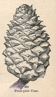 From the book Botany for Young People and Common Schools, Copyright 1858 by takeabreak, via Flickr
