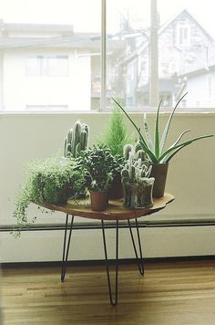 Indoor apartment plants checks and spots inspiration decorating with indoor plants house plants apartment therapy Apartment Plants, Apartment Gardening, Plant Table, Plants Are Friends, Cactus Y Suculentas, Cacti And Succulents, Cacti Garden, Autumn Home, Houseplants