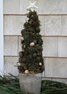 There is still time to craft this easy DIY succulent tree before Christmas! >> http://blog.hgtvgardens.com/createlivingsucculenttree/?soc=pinterest