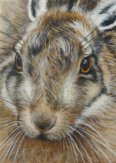 'Up Close' Hare, acrylic, by Sue Warner