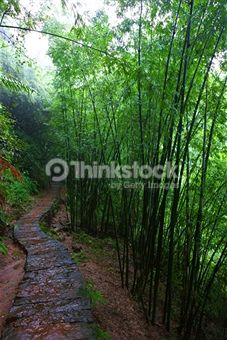 Search for Stock Photos of Journey on Thinkstock