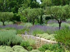 Groupe Derbez Landscaping Retaining Walls, Hillside Landscaping, Gardening For Beginners, Gardening Tips, Lavender Garden, Greenhouse Gardening, Garden Landscape Design, Run Around, The Expanse
