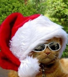 #ChristmasHumor | Merry Christmas to all the cat lovers . . . And, of course, to all the #cats