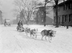 MUSH: Dog sled pulling a mother and child down a snow covered street in Chicago, c.1904 Rather odd scene. Notice the car further back on the street.