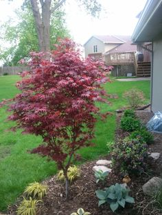 1000 images about garden trees small landscape on for Small flowering trees for front yard