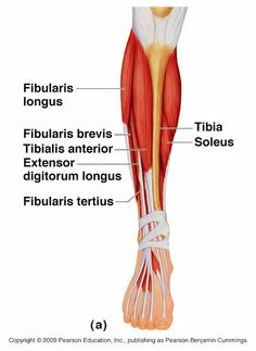 how to get bigger calf muscles in a week