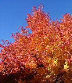 Beautiful fall colors. Aurora, CO