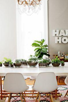 Plantas De Interior Para Crear Una Jungla Urbana En Tu Casa