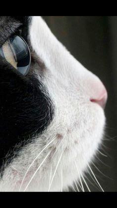#CatPhotography