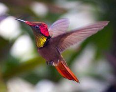 simply-beautiful-world: ❥‿↗⁀♥ simply-beautiful-world Pretty Birds, Beautiful Birds, Animals Beautiful, Cute Animals, Simply Beautiful, Exotic Birds, Colorful Birds, Hummingbird Pictures, Tiny Bird