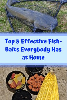 Top 5 Effective Fish-Baits Everybody Has at Home Catfish Trap, Catfish Fishing, Fishing Rigs, Carp Fishing, Kayak Fishing, Fishing Stuff, Trapezius Workout, Homemade Catfish Bait, How To Catch Catfish