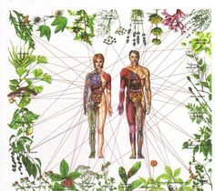 Healing the Seven Chakras with Herbs // from Fractal Enlightenment