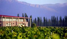 Bodega Tapiz is one of the best wineries for wine tourism in Mendoza. It has a boutique hotel, restaurant, wine spa and wine related activities.